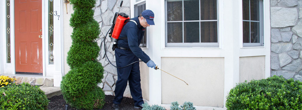 About Our Pest Control Services